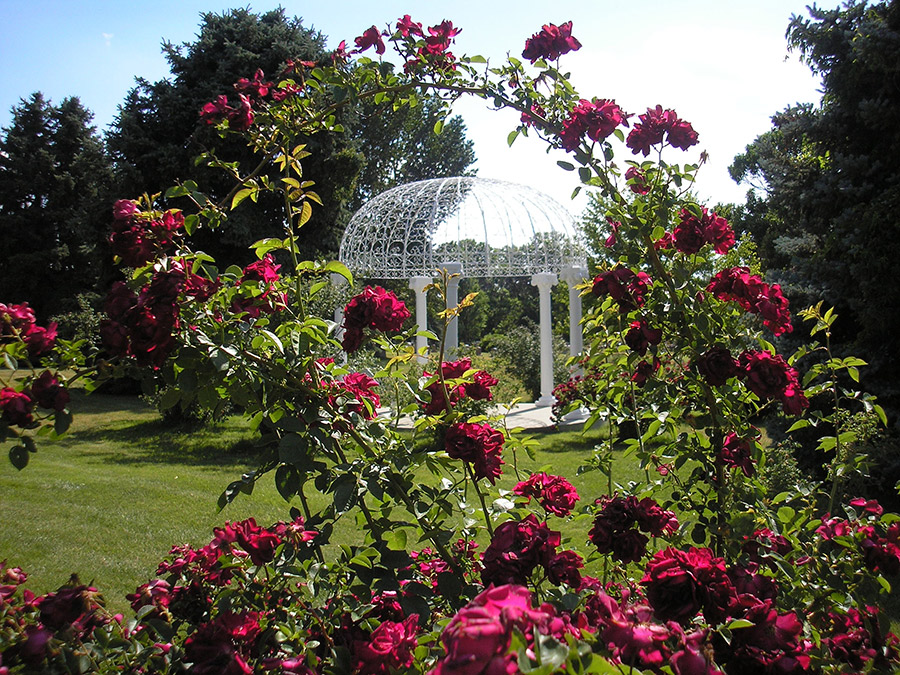 Gazebo  Rose Garden Block 85 July 2 2013